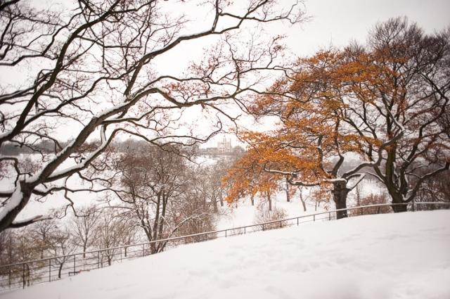 A snowy scene in Greenwich Park- image by Rik Pennington